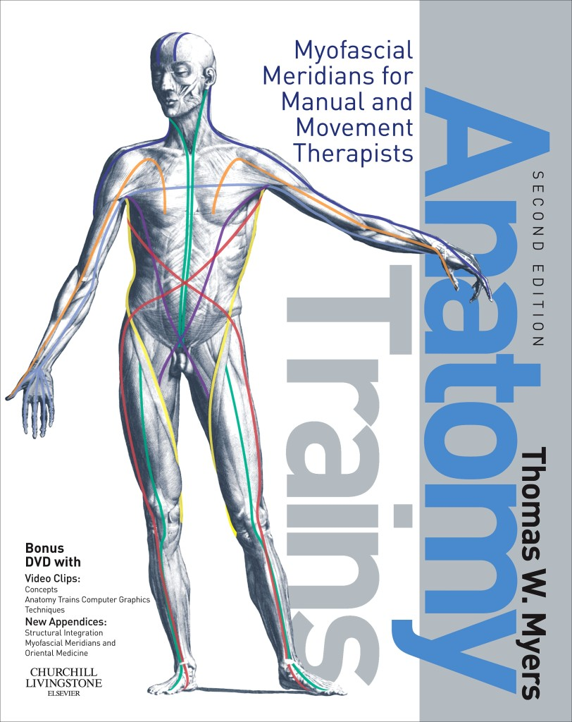Baseball Training Equipment for Hitters: Anatomy Trains by Thomas Myers